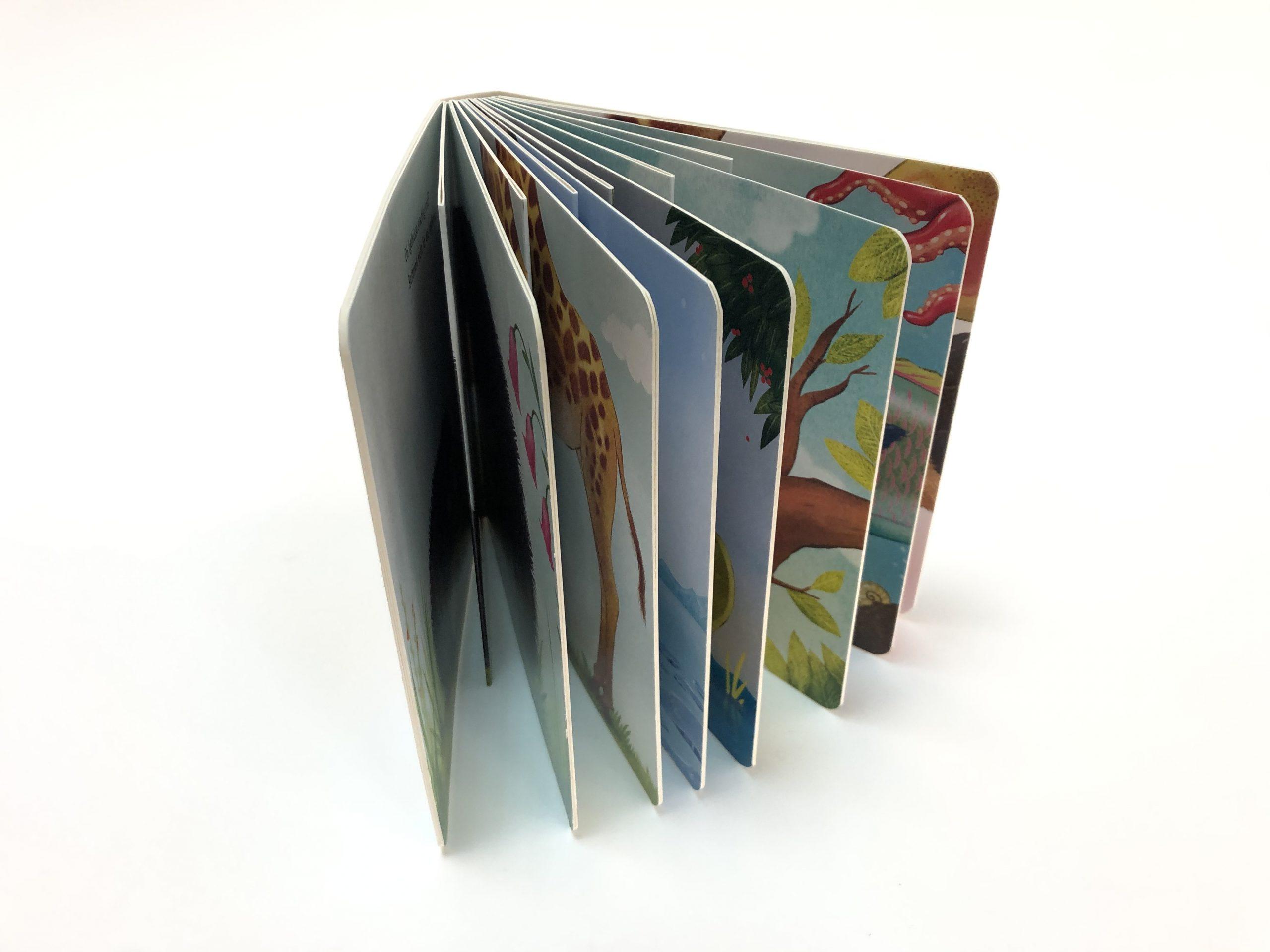 libro de cartón con páginas interiores diferentes - IMG_8295